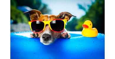 Vai levar o seu patudo de férias? Então leia este artigo.